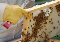 The Things a Beekeeper Uses