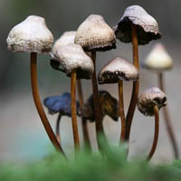 The Conditions Needed for Mushroom Growing