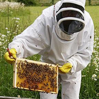 History of Beekeeping