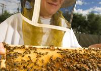 Harvesting the Honey