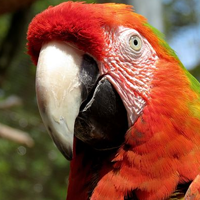 Cleaning Your Aviary