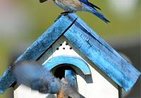 Bird House Kits Make Great Bird Houses