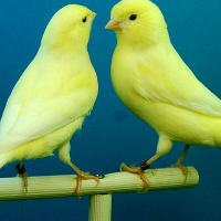 Tips for Building an Aviary