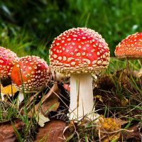 The Secrets to Mushroom Growing