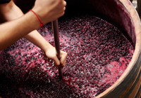 A Look at the Steps of Making Wine