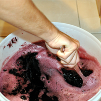 Guide to The Basics of Winemaking
