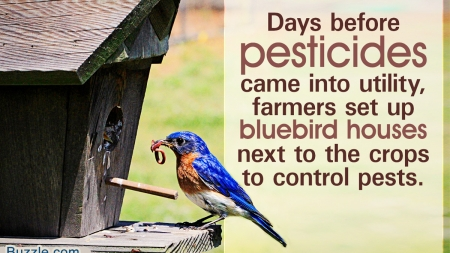 Follow These Plans to Build a Comfortable House for a Bluebird