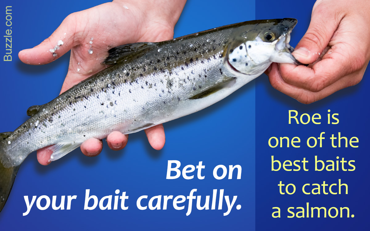 Outrageously Helpful Tips on Salmon Fishing