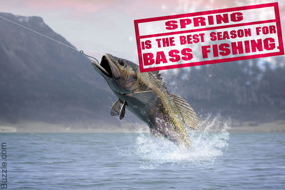 This is Where You'll Learn How to Catch Bass Effectively