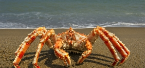 Alaskan King Crab Fishing
