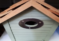Building Bird Boxes: Something You'll Definitely Want to Try