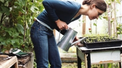These Tips Will Help You Grow Plants in Your Very Own Greenhouse