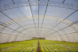 How Does a Greenhouse Work? Take a Look Into its Intricacies