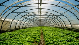 Know How to Use a Greenhouse to Grow Natural and Organic Plants