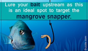 20 Dynamite Fishing Tips to Catch a Mangrove Snapper Like a Pro