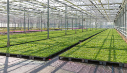 Vital Things to Know and Jot Down Before Choosing a Greenhouse